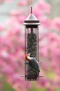 Fundamentals Squirrel-proof Feeder